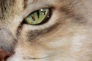 patrice Le Gonidec. à la manière de. PATRICIA BLONDEL.clin d'oeil de chat
